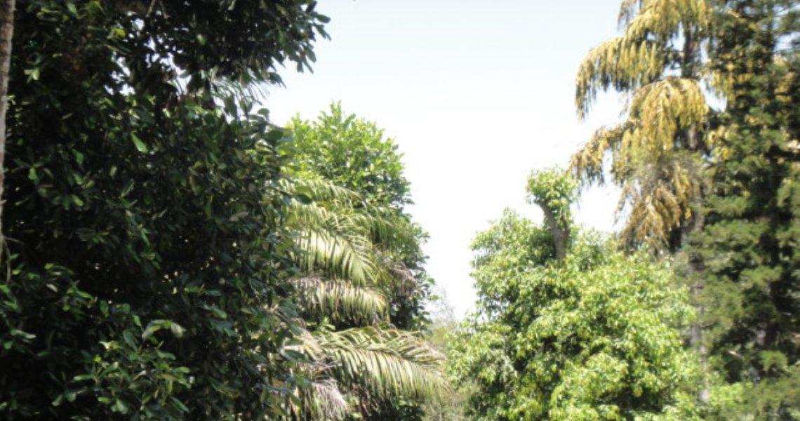 Casa, 4 Quartos (2 suítes), São Conrado, Venda e Aluguel